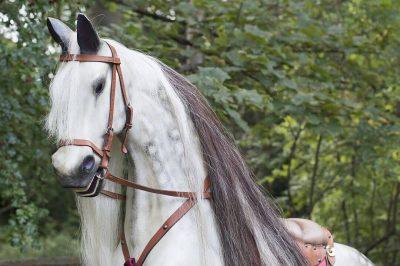 Yorkshire Rocking Horses Dapple Grey Hand Carved Head & Mane