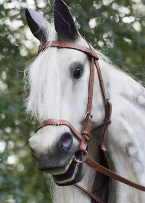 Yorkshire Rocking Horses Dapple Grey Horse Headshot
