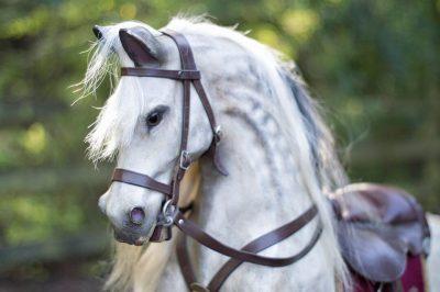 Yorkshire Rocking Horses Old War Horse Head Closeup